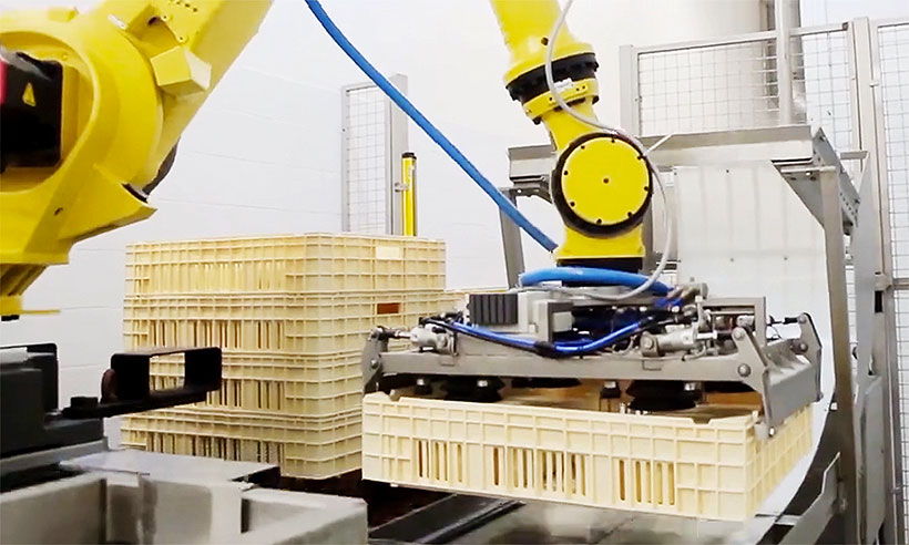 Робот перемещает пластмассовый ящик для созревания сыра по конвейерной ленте