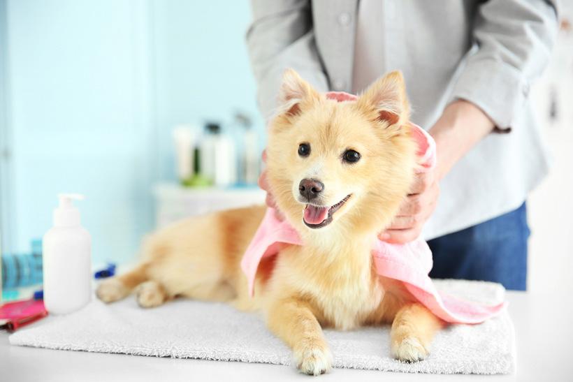 Компания производит микрофибру под торговой маркой BICOTEX для широких областей применения, в том числе и для домашних животных