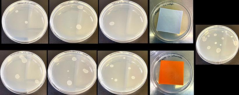 Смывы, 48-часовая инкубация. Серый образец — PETG Biocide, оранжевый образец — обыч-ный PETG, справа — контрольная воздушная контаминация без полимера